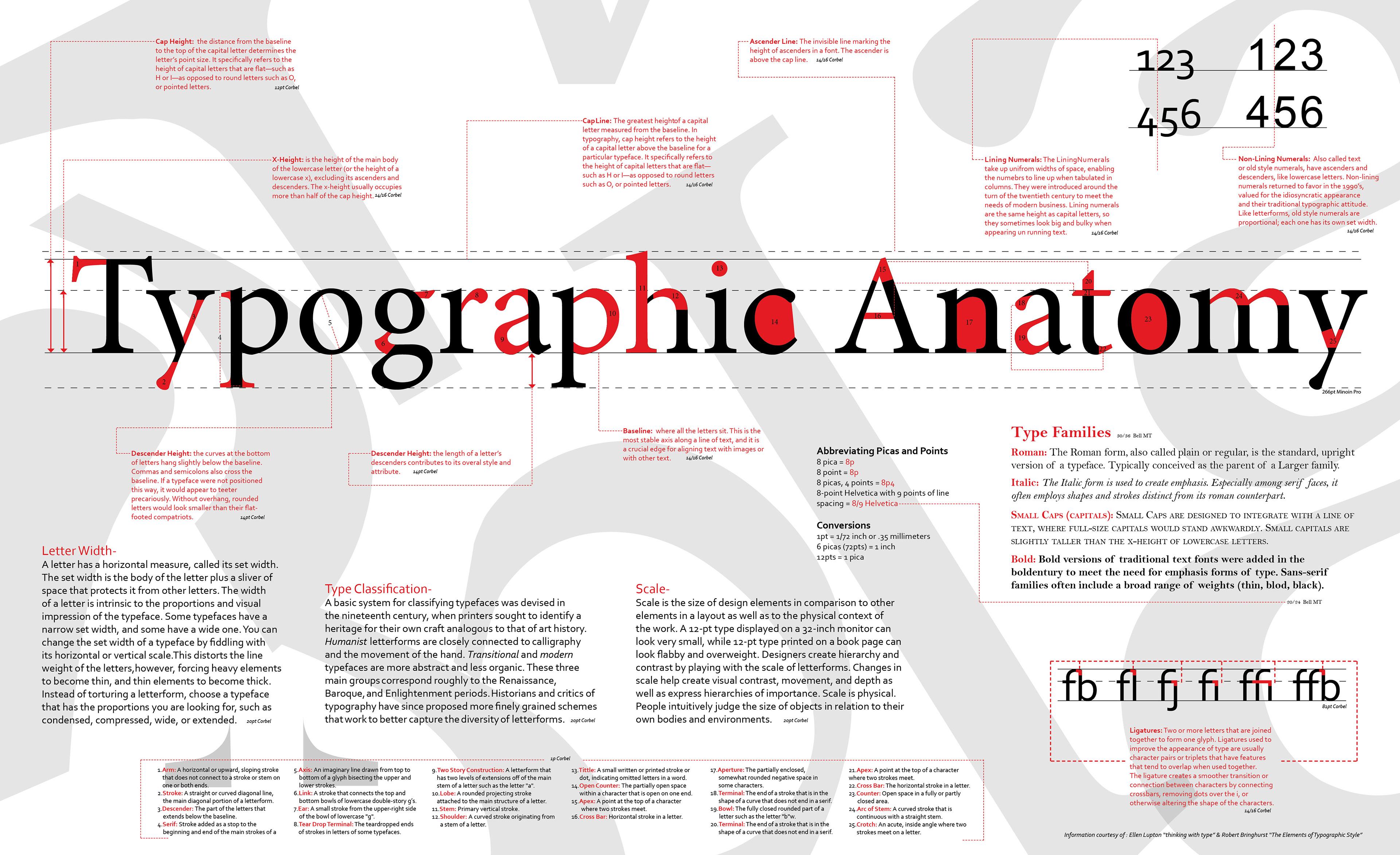 Cassondra Rosales - Typographic Anatomy Poster