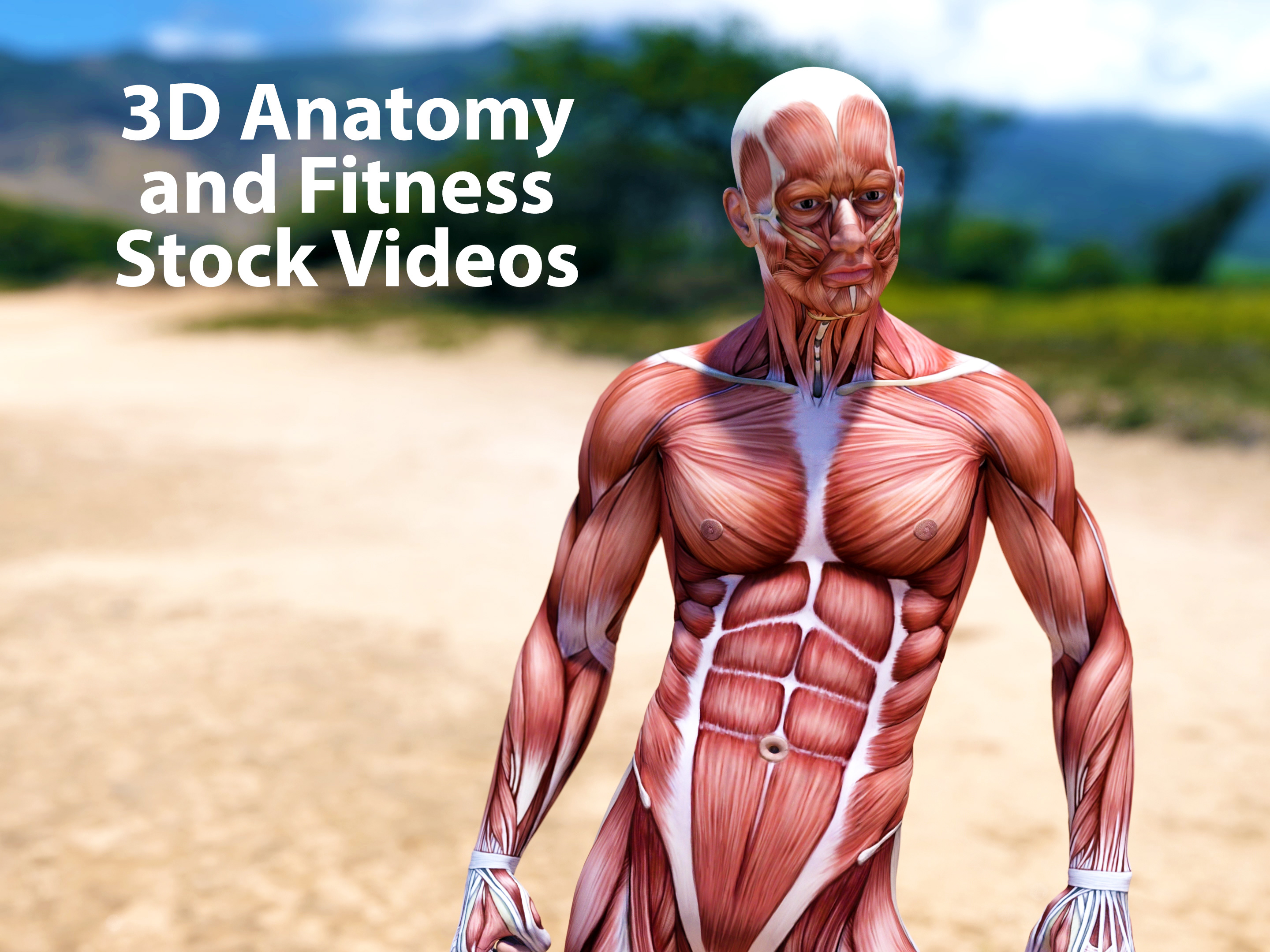 Captain Design - Bodybuilding Fitness Intro Anatomy Biceps Muscle