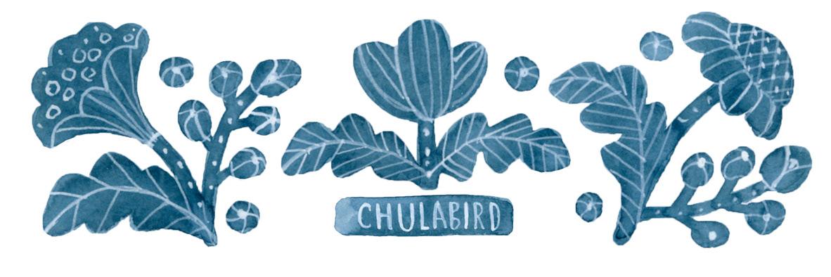 Chulabird
