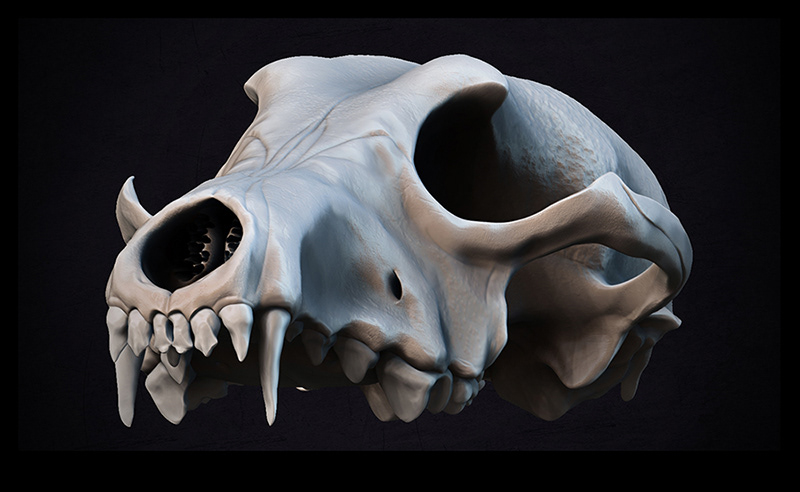 Andrew Stombaugh - Coyote Skull