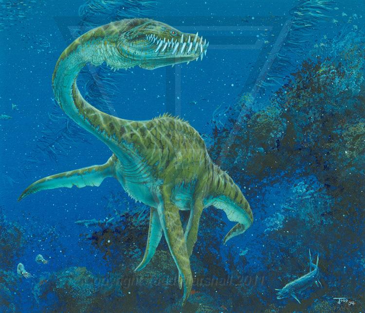 хабаровске карте картинки водяной динозавров куркова порадовала