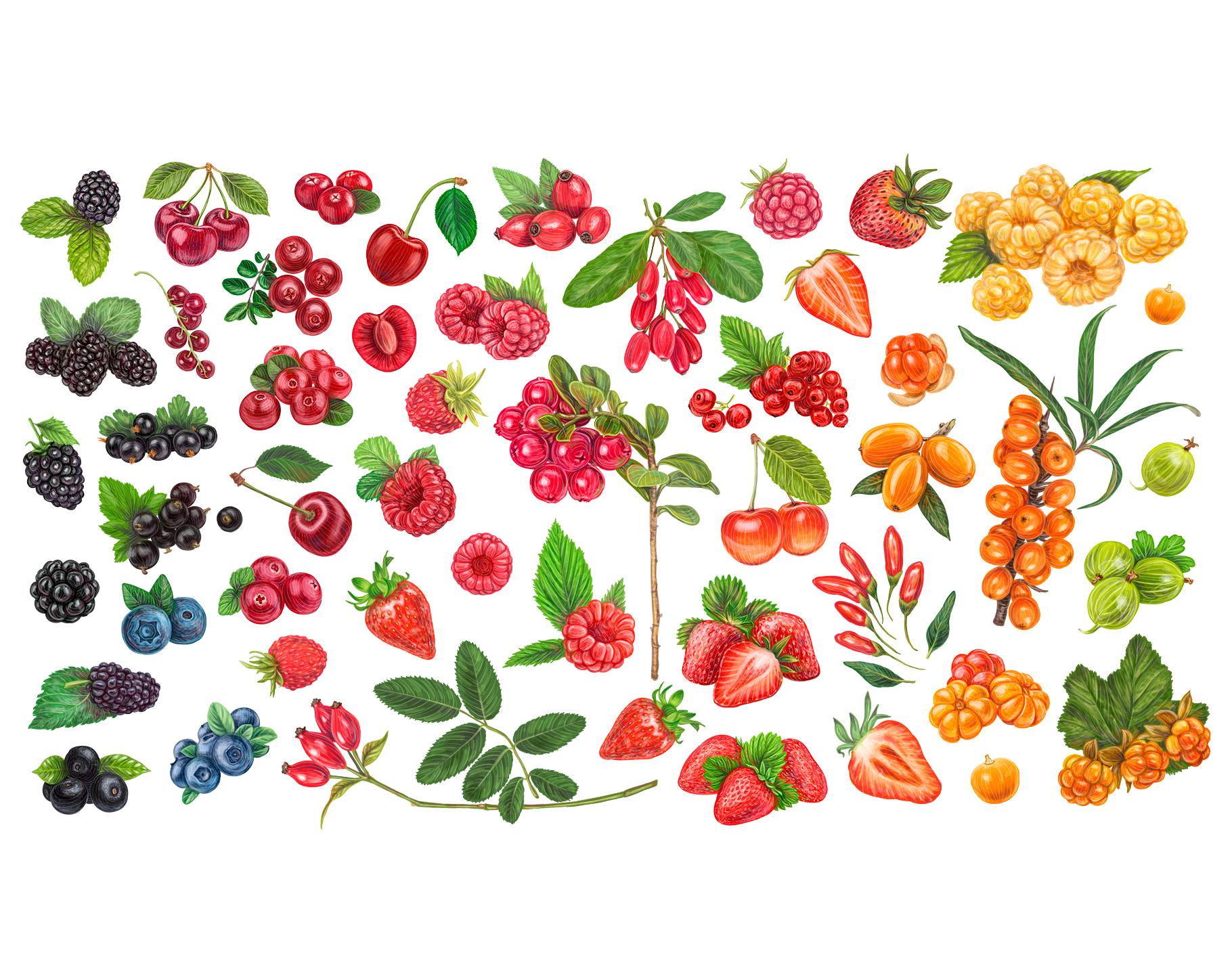 ягоды картинки в векторе видео можете