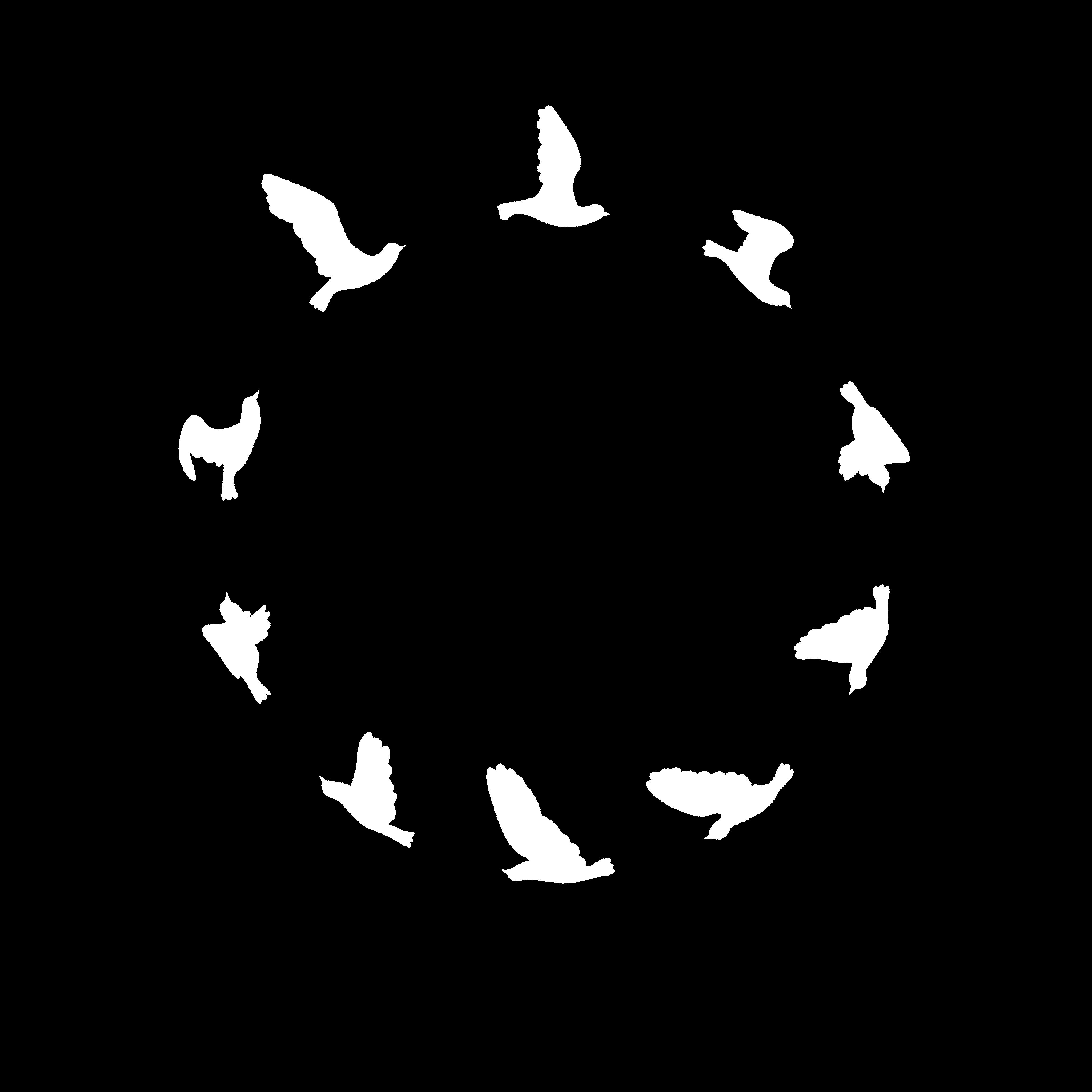 Wild Pigeon Films