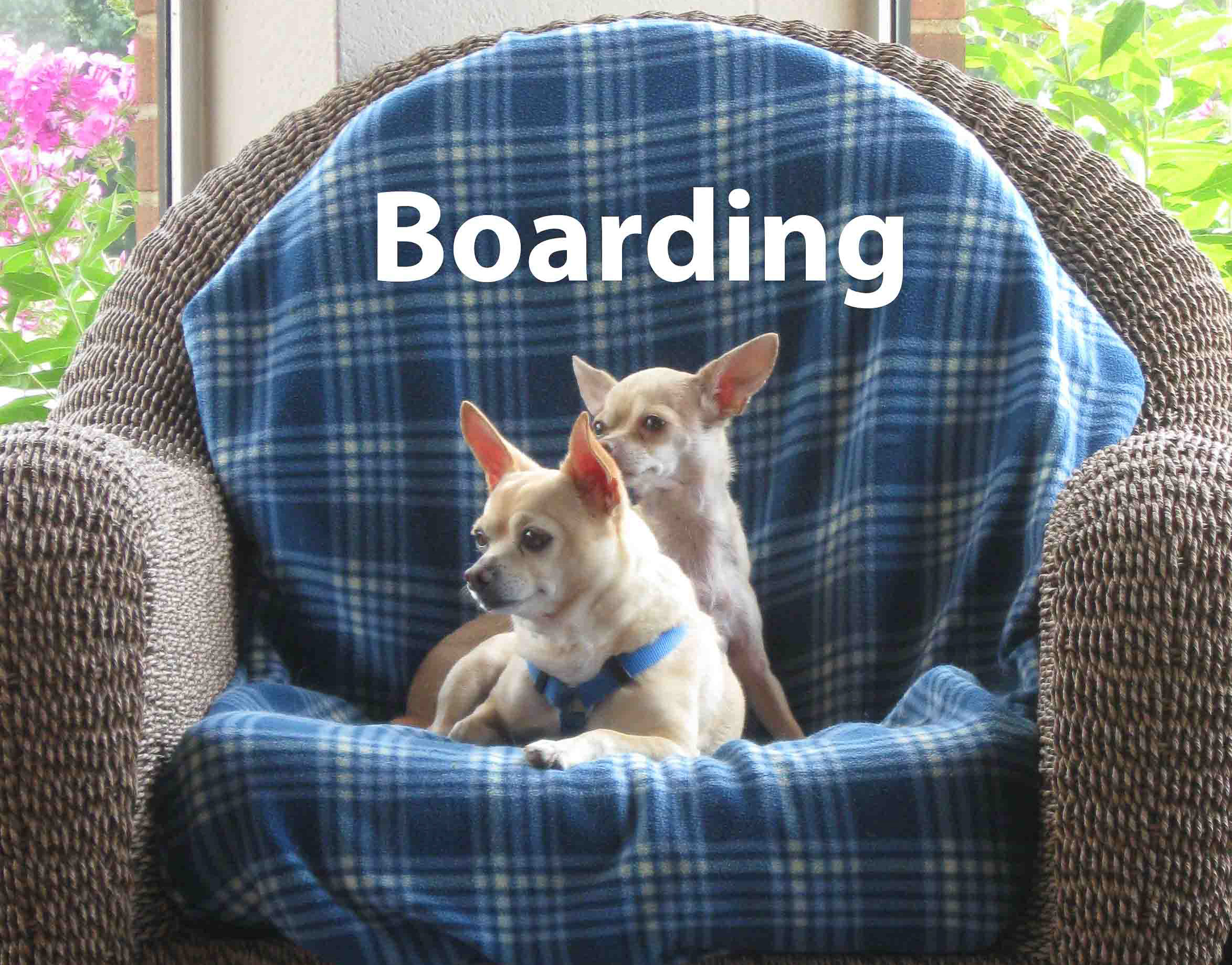 Petite pet inn boarding grooming training and daycare for small dogs boarding solutioingenieria Images