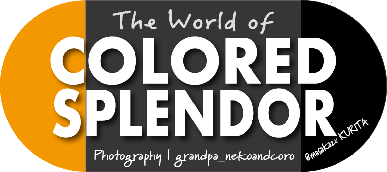 The World of Colored Splendor( English)