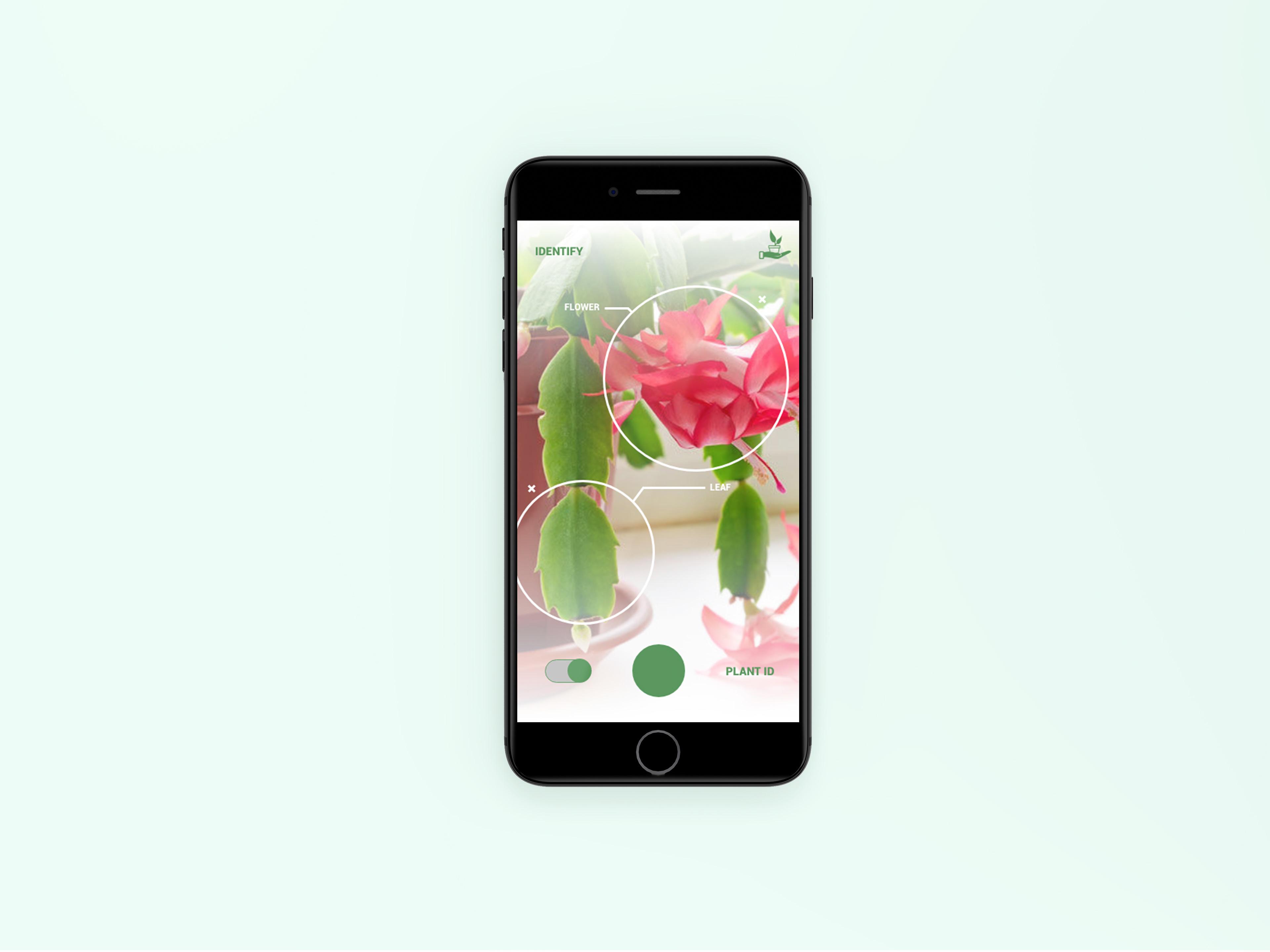 Kara Davis - Plant Care App