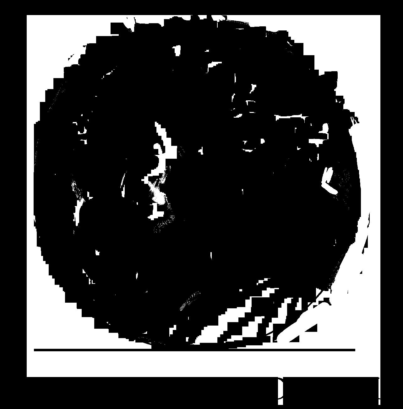 Maartje van Dokkum