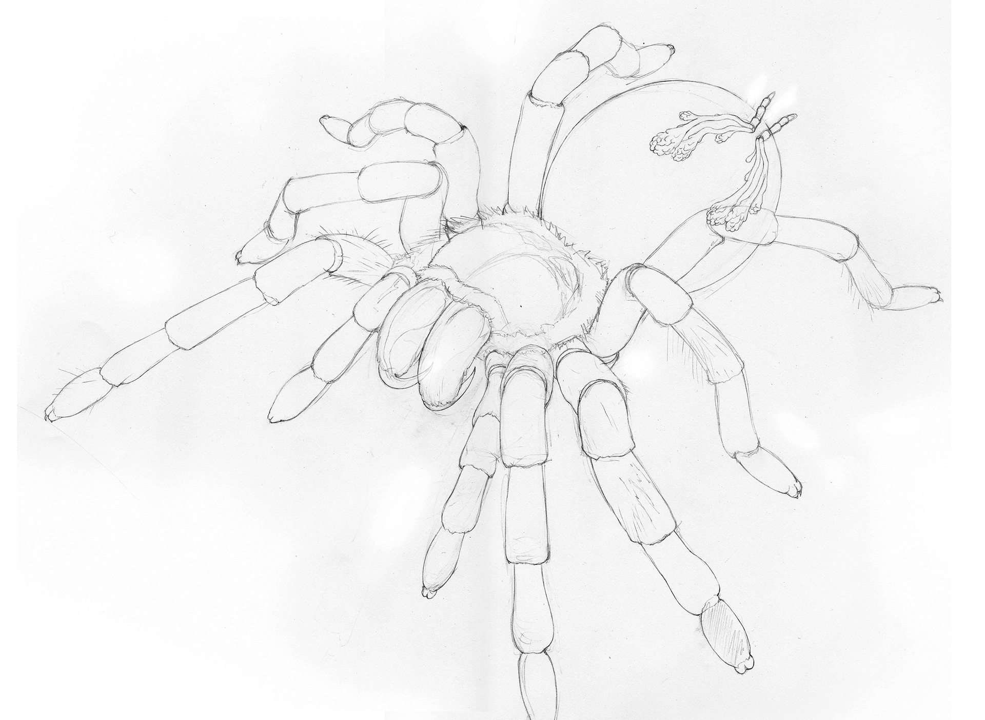 Pedro Andrs Velasco Morales Anatomy Of A Spider
