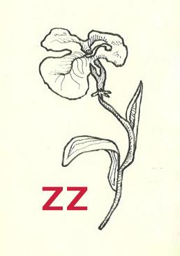 Zoé Zénon