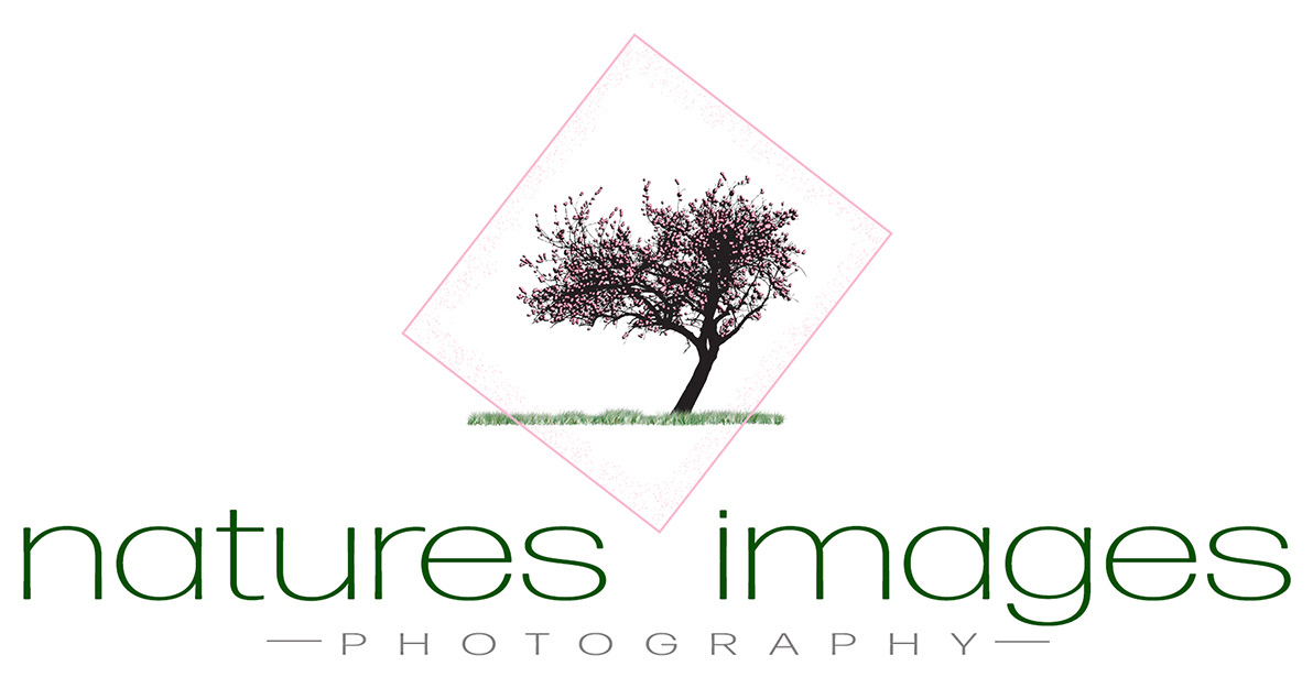 Natures Images Photography by Sherie Haunzwickl