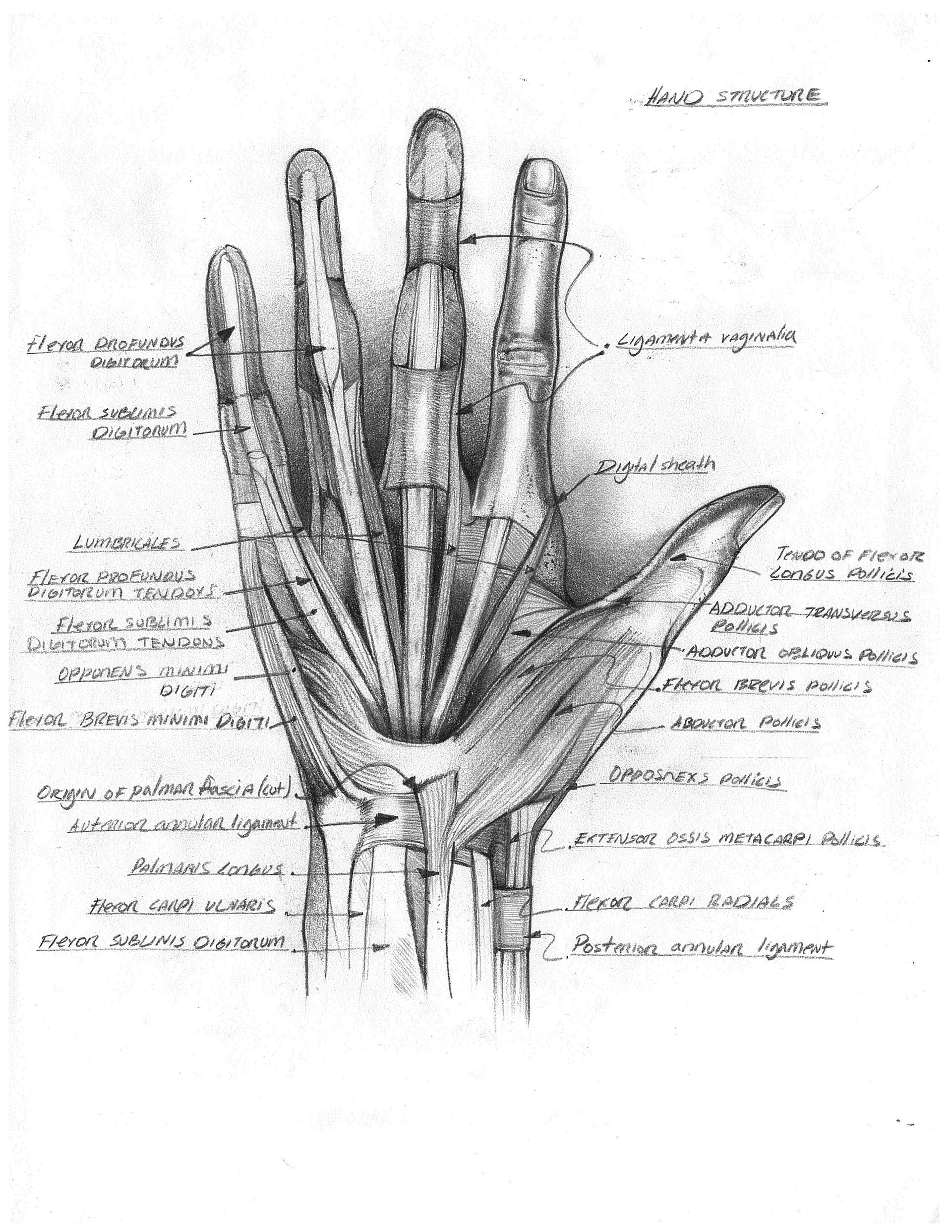 Jonathan Osborne Human Anatomy Illustrations And Sketching